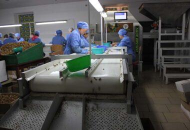 Proiectarea si confectionarea linie de procesare a miezului de nuca